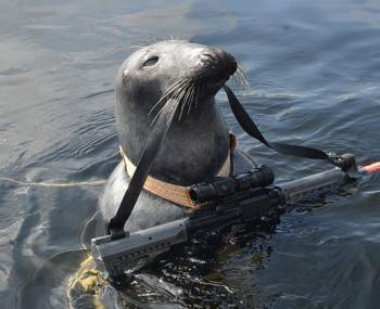 В Мурманске обучают тюленей воинской службе
