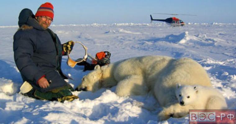 Роснефть профнансирует научно-исследовательскую экспедицию по исследованию медведей
