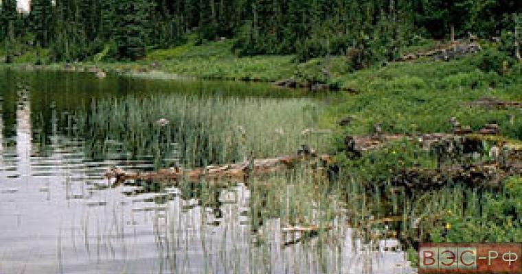 Труп женщины обнаружен в водоеме