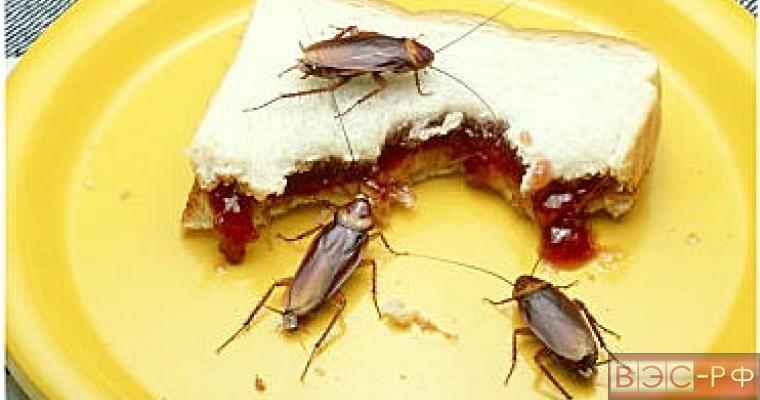 антисанитария в столовой, тараканы