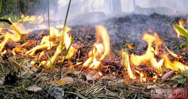 Запрет на посещение лесов из-за пожаров
