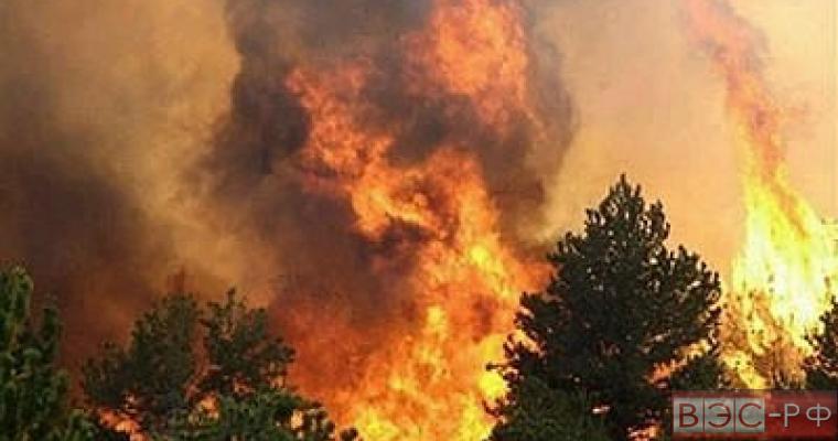 В Забайкальском крае и Бурятии площадь пожаров постепенно сокращается