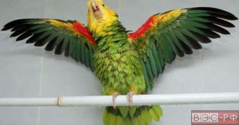 продавец попугая насмешил интернет