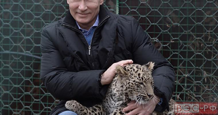 Рейтинги одобрения Путина не подчиняются физическим законам , - Forbes