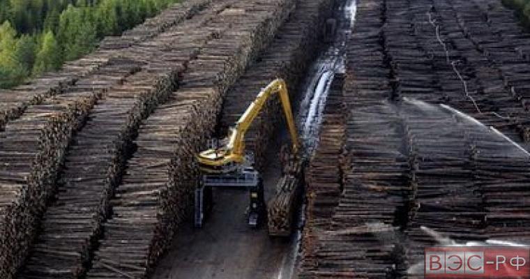 Финляндия обеспокоена возможными ограничениями на торговлю лесом с Россией