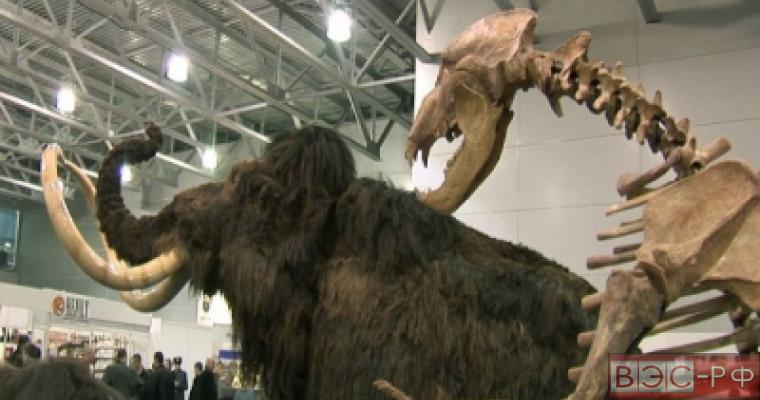 Учёные обнаружили фрагмент кожи мамонта