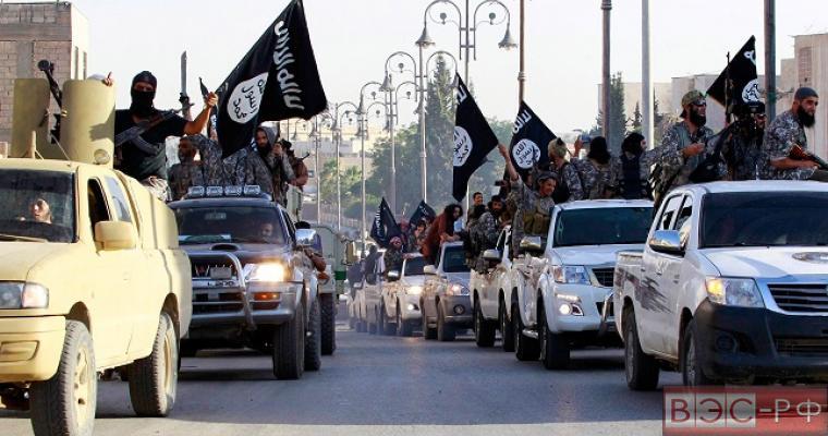 Госдеп США сам отправил в Сирию Toyota, которые оказались в руках ИГИЛ