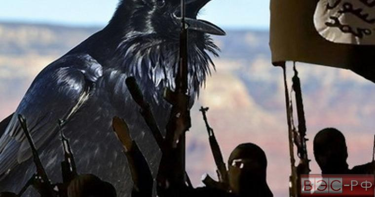 ИГИЛ натравит птиц-смертниц на российские самолеты