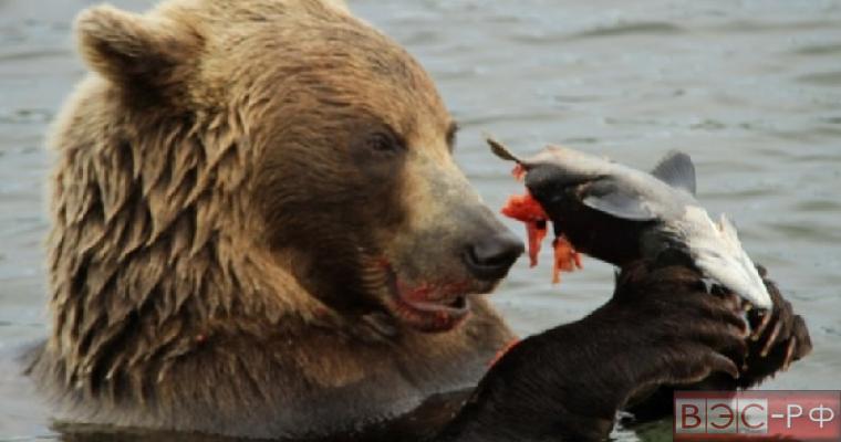 Медведь и ковбой