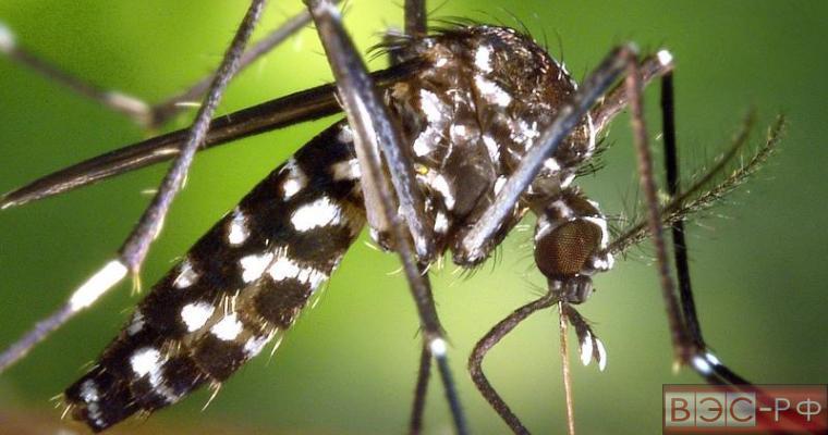Вирус Зика обнаружен в 44 странах