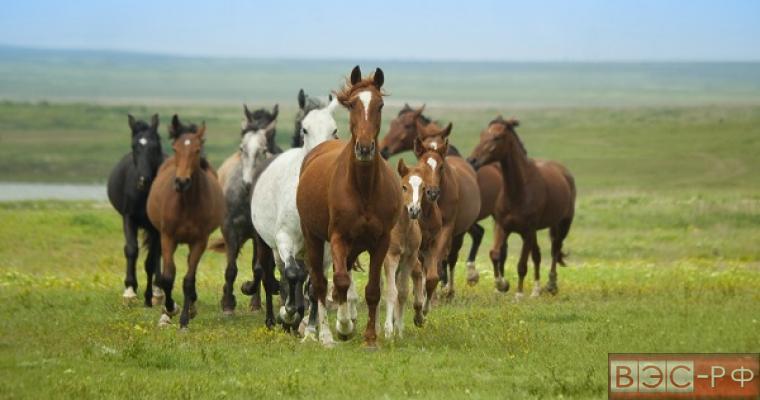поддержка табунного коневодства