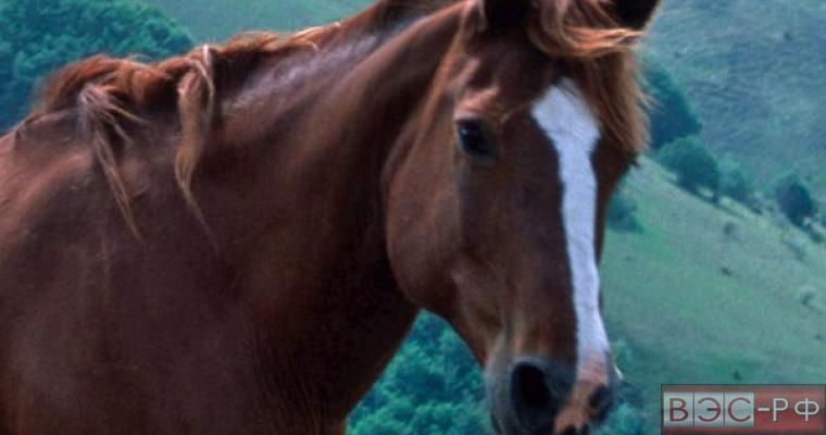 Россельхознадзор усыпил лошадей с Украины