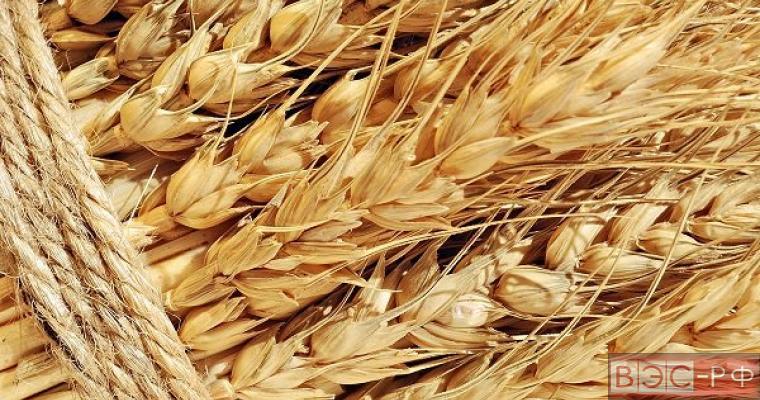 Экспорт пшеницы в Китай