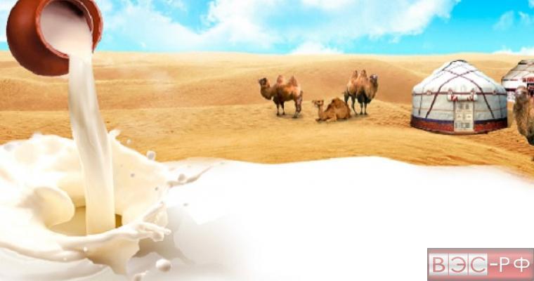 Верблюжье молоко экспортируют в РФ из ОАЭ