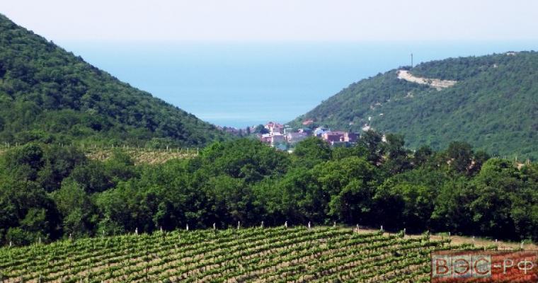 Зарубежные инвесторы планируют виноградники в Крыму