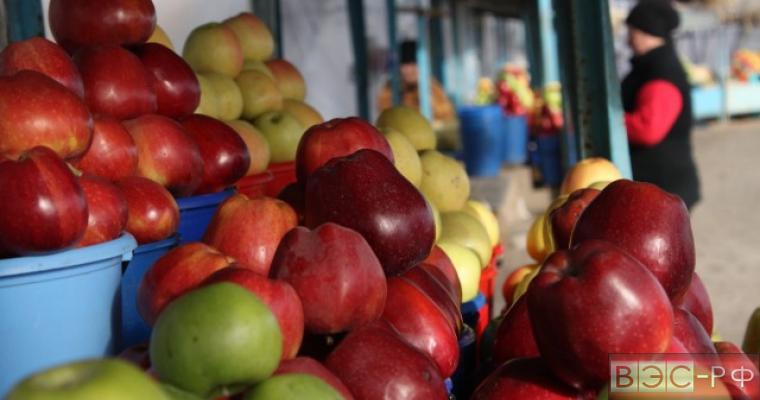 запрет на поставки продуктов из Турции