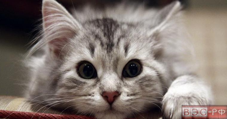 вежливые коты покорили интернет