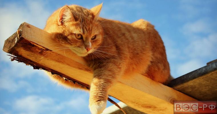 поиск кота на картинке