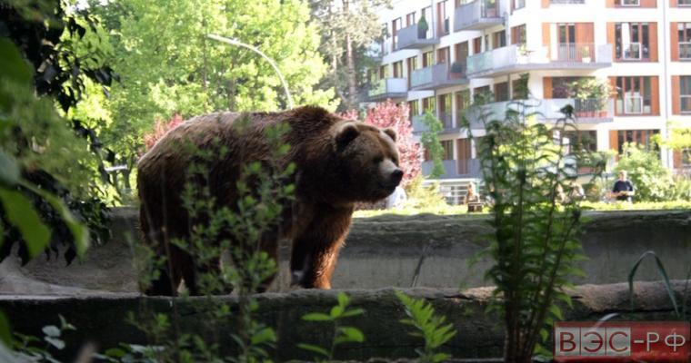 Медведь зашел в детский сад