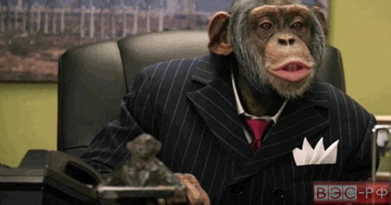 Учёные обнаружили сходство в поведении политиков и обезьян