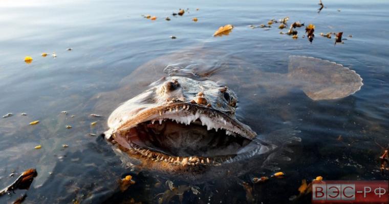 Ужасное существо с огромными клыками удалось сфотографировать рыбакам