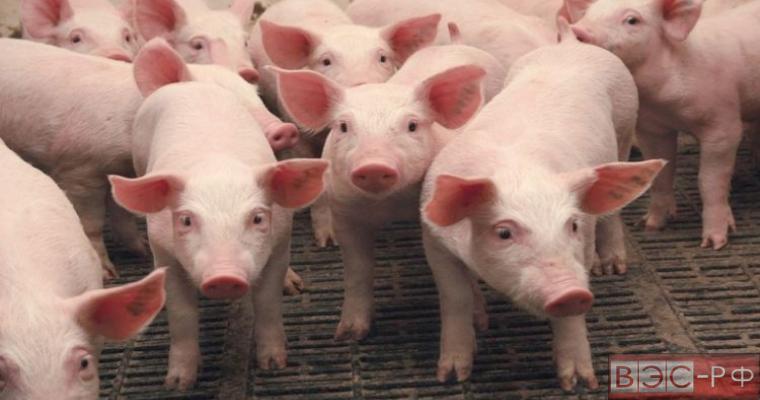 эмбарго на ввоз свинины из ЕС